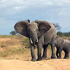 Elephant with calf in Tanzania by Jan Zoetekouw
