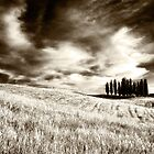 Tuscan Pines by dgt0011