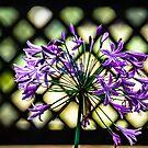 Beauty Lines by Sotiris Filippou