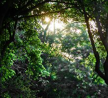 Green Forest  by Sotiris Filippou