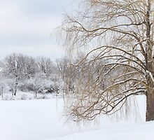 Winter Willow Tree by picsbytabitha