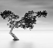 Lonely Tree by Rudy Heijmen