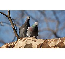 Two pigeons iPhone case Photographic Print