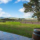 Jacobs's Creek Vineyard by Steve Randall