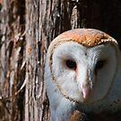 Barn Owl by Lisa G. Putman