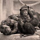 Family Unit by RichardCurzon