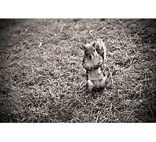 Squirrel iPhone case Photographic Print