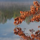 Fiery Tree and Smoky Water by April Koehler