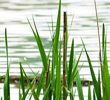 Wetland Grass by MSRowe Art and Design