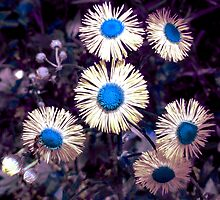 English Daisies - Surreal Blues by SRowe Art