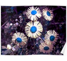 English Daisies - Surreal Blues Poster