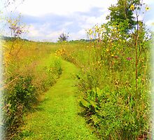 Trail to Summer by TrendleEllwood