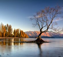 Wanaka,That Tree #5 by Brad Grove