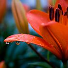 Water Drops by Michael Atkins