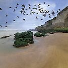 Curlew Dawn by peaky40