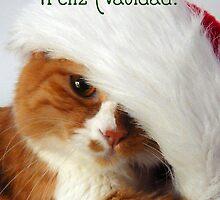 Feliz Navidad - Christmas Cat in Santa Hat by MoMoCards