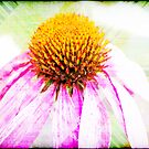 Echinacea abstract by RosiLorz