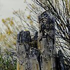 Western Screech Owl-Hiding Out by Catherine Fenner