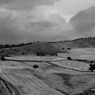 Sicily. Fields II in BW. 2013 by Igor Pozdnyakov
