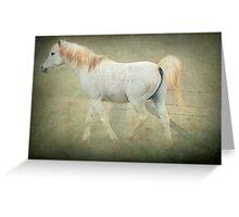 Arab Stallion Greeting Card