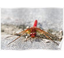 Red Dragon Resting Poster