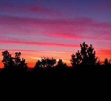 Sunset in Santa Rosa by Martha Sherman