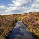 A Day on the Moor by partridge