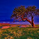 """""""The Forgotten Tree"""" by Phil Thomson IPA"""