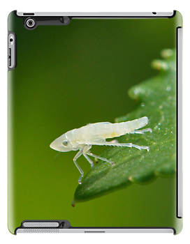 Leafhopper (iPad Case) by William Brennan