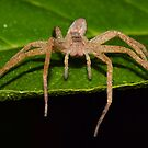 Nursery Web Spider (iPad Case) by William Brennan