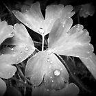 Catching Rain by DelisaCarnegie