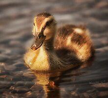 Water drops on duckling by Yannik Hay