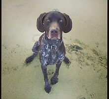 pointer on the beach by HollyNewts