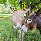 Burro Buddies by Bonnie T.  Barry