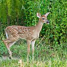 Fawn in the Forest by Bonnie T.  Barry