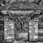 Audubon Park Northeast Path  Entrance-B&W by GJKImages