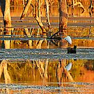 Reflections on Lake Kununurra by Julia Harwood
