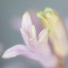 soft tones by ma-fleur-art