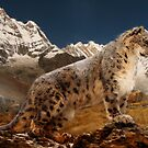 Snow Leopard by Cliff Vestergaard