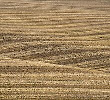 Rolled Wheat, North Yorks Moors National Park by strangelight