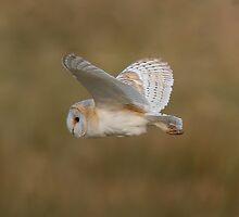 British Birds, Photographer Trevor Hannant by Trevsnature