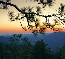 Yosemite Dusk by Ellen Cotton