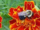 Full of Pollen by Susan S. Kline