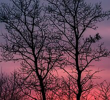 Morning Trees 2127_2013 by Ian McGregor