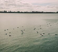 Seagulls on the Water by brookenash