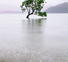 The Tree in the Lake II by Robyn Carter
