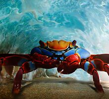 Tube Crab  by Cliff Vestergaard