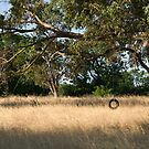 The swing by Gnangarra