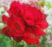 Red Rose Edges Sketchy by Christopher Johnson