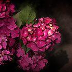 Pink Hydrangea by Danuta Antas